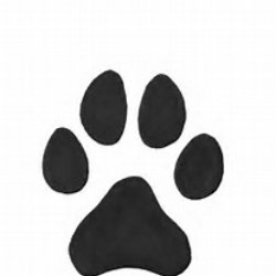 Picture of a dog paw.