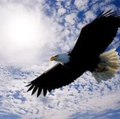 Eagle soaring in the clouds
