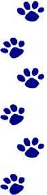 Image result for wildcat paw print
