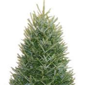 Christmas Tree Sales 2017