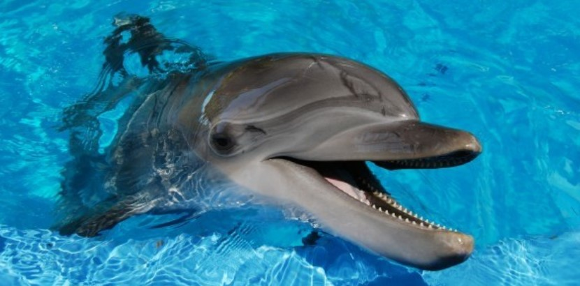 "Photo of a dolphin and the name ""Dildine"""