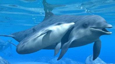 Picture of two dolphins