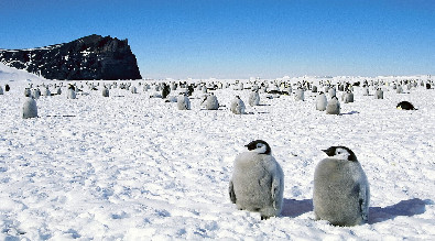 Picture of Antarctica