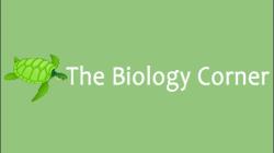 Biology Corner