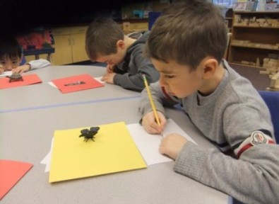 photo showing a little boy drawing a turtle