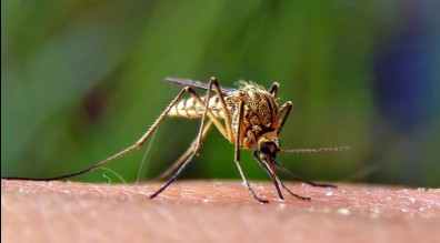 EEE and West Nile Virus