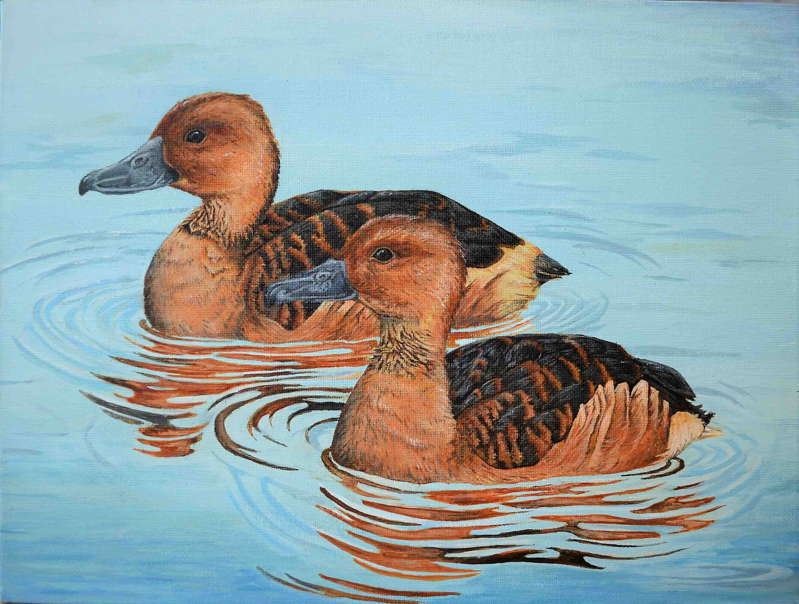 Best in Show for Alaska - Natl Jr. Duck Stamp Competition!